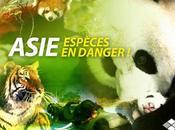 Article Asie, espèces menacées