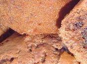 Muffins chocolat quinoa