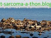 7ème participation l'opération: help-beat-sarcoma-a-thon