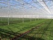 Grandes chacune comme terrains football, serres produiront millions légumes semaine, découvrez images