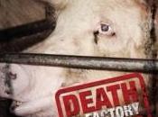 film cruauté animal primeur!