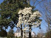 Arbres Jardin Thabor Rennes
