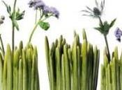 Normann Vase Grass