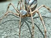 L'Araignée Argentée millions d'années)