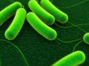Découvertes l''origine infections bactériennes
