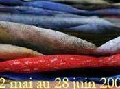 Galerie Olivier MARQUET présente Cédric CORDRIE