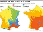 Réchauffement climatique: quels arbres planter