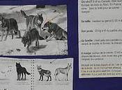 [classes]Carte d'identité loup [Flickr]