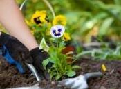 nouvelles vertus thérapeutiques dues jardinage