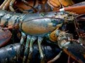 Découvrez vidéo plus grand sandwich homard monde