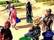 projet Acacia, nouveau modèle développement durable Sahel