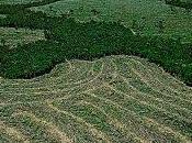 Amazonie enjeux d'un massacre