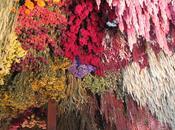 Faire sécher fleurs deson jardin