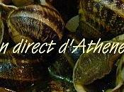 Recette cretoise Escargots tomate laurier