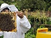 Sauvez abeilles: gardez ruche maison