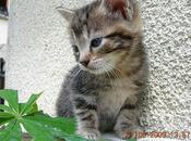 Aurillac Chatons donner