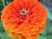 Triptyque floral création
