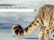 Live.com fait promo Snow Leopard