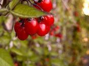 Soixante-neuvième participation Chaussons feuilletés pommes raisins