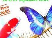 Coupe Espoir Départementale Interflora Rueil Malmaison