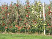 Côté jardin Plantez fruitiers.