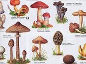 champignons général ....