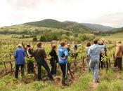 Devenez vigneron avec Vignes