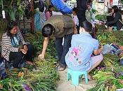 Udonthani: orchidées vendues kilo.