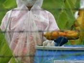 Acquittement deux activistes anti-OGM Greenpeace Thaïlande