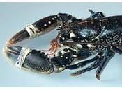 Croustillant homard