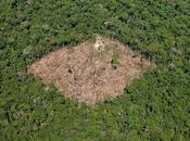 déforestation dans l'état Parà, Brésil