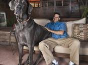 George, plus grand chien monde