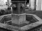 fontaine chiens