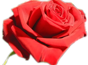 Saint Valentin arrive