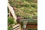 toits végétalisés l'avenir ville durable