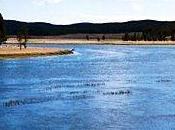 Destination vendredi magique...Yellowstone