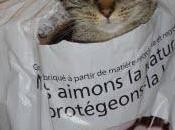chat-pitre écolo