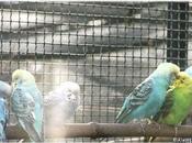 Oiseaux exotiques Jardin Thabor Rennes (2/4)