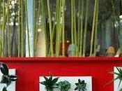 Murs cloisons végétals