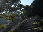Camino Maya: Palenque Ruines dans jungle