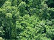 Conférence Internationale Paris pour protéger forêts, stopper financer moteurs déforestation