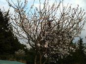 Pourtant, c'est printemps...