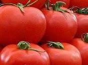 tomate:Son origine nord ouest l'Amérique