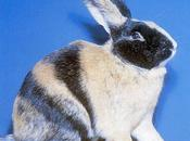 Elevage lapins, mode d'emploi