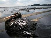 Marée noire Louisiane près animaux mazoutés déjà morts