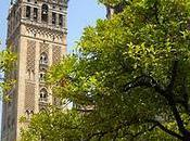 cathédrale Séville: Histoire visite