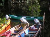 Crique Gabrielle balade l'eau