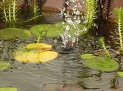 fabriquer mini bassin aquatique!