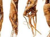 ginseng plante-homme rajeunissement