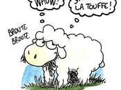 Retour mouton